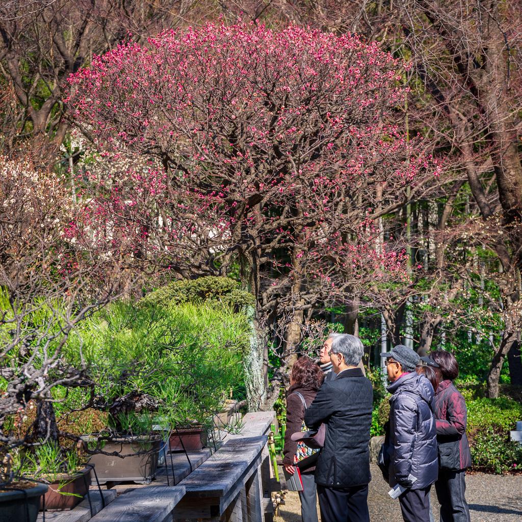 حديقة تقليدية في طوكيو