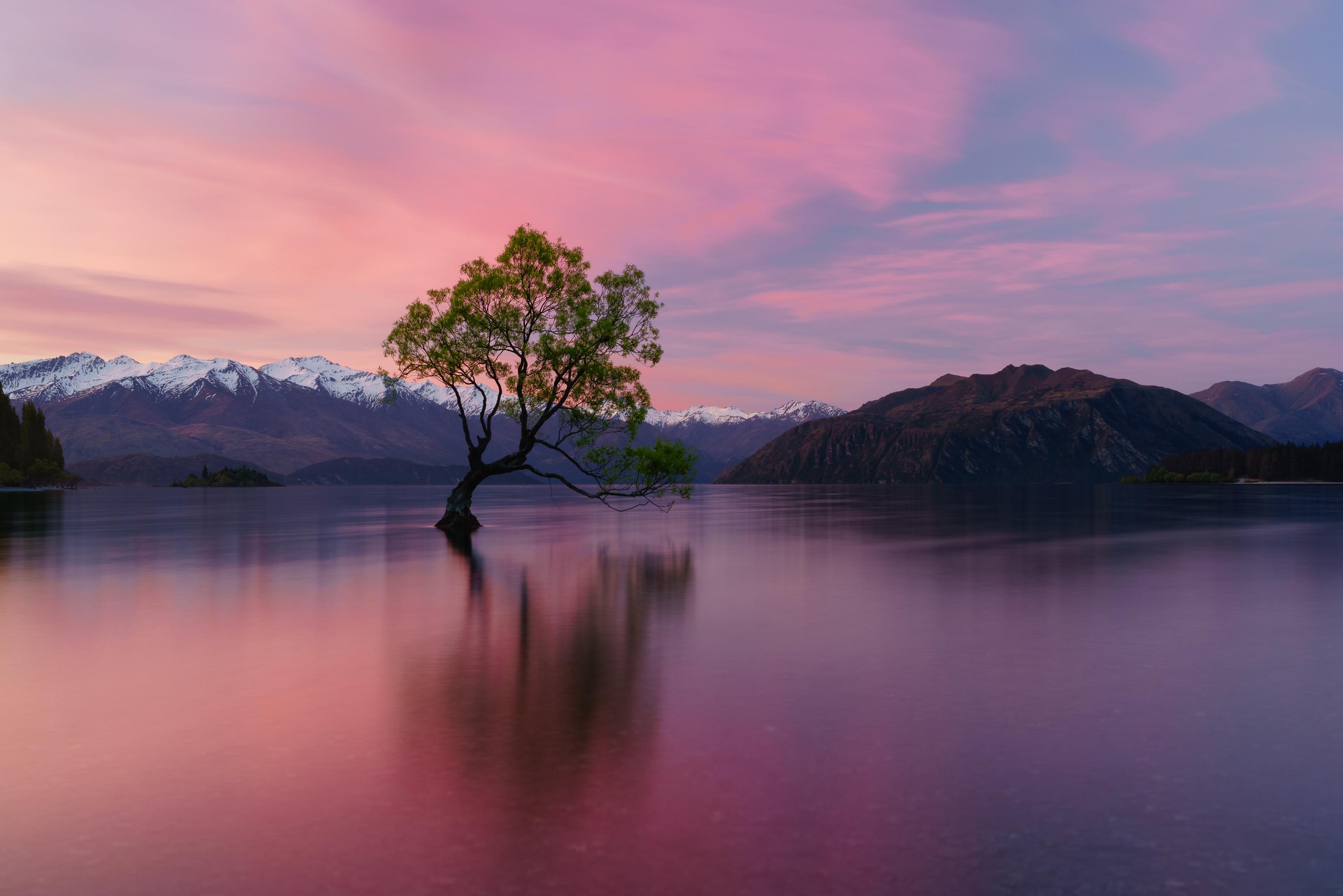 شجرة وحيدة في بحيرة واناكا محاطه بجبال الألب الجنوبية المذهلة في نيوزيلندا